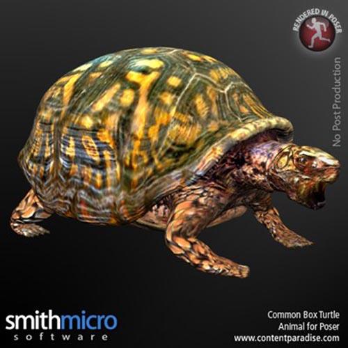 Common Box Turtle