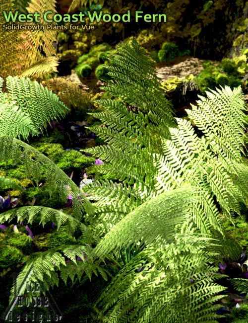 West Coast Wood Fern