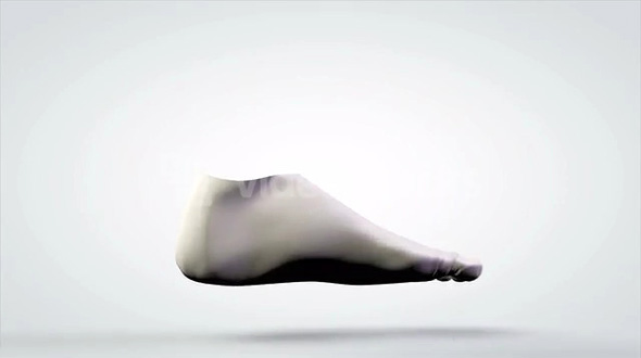 Rotating 3D Anatomical Model of Human Foot