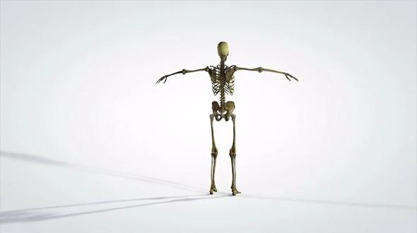 3D Rotating Anatomical Model of Human Skeleton