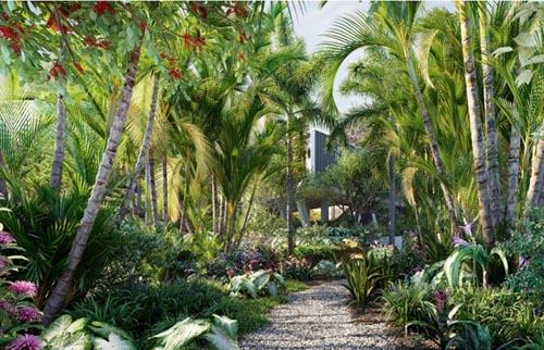 Globe Plants - Bundle 32 Brazilian Home & Garden Plants