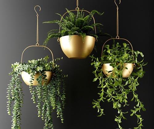 Ampel plants in bronze flower pots