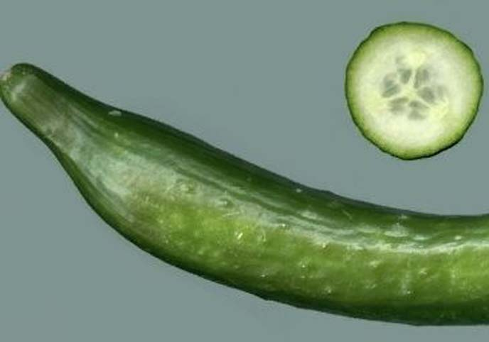 A cuted and nice cucumber