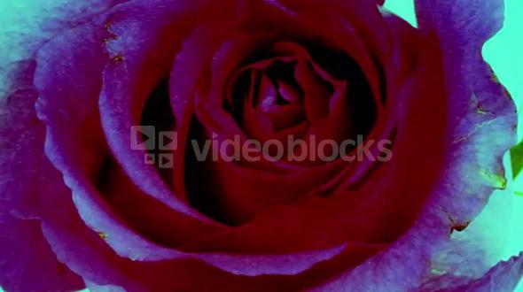 Digital Glitch Rose