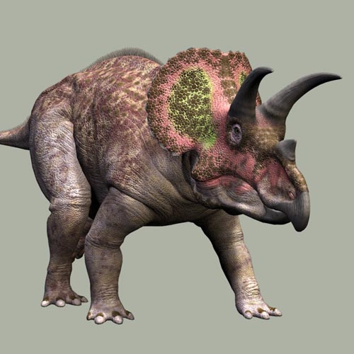 TriceratopsDR