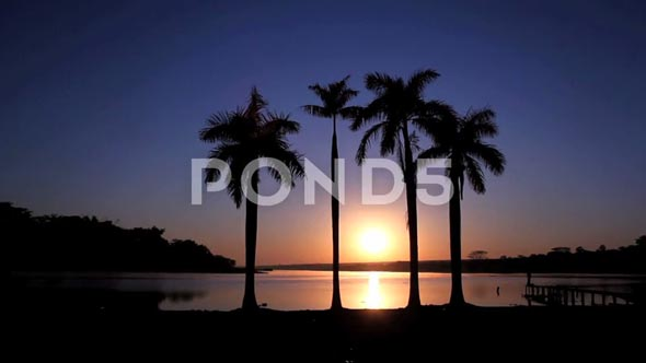 Paradise Beach - Tropical, Palm Tree And Sun Rising