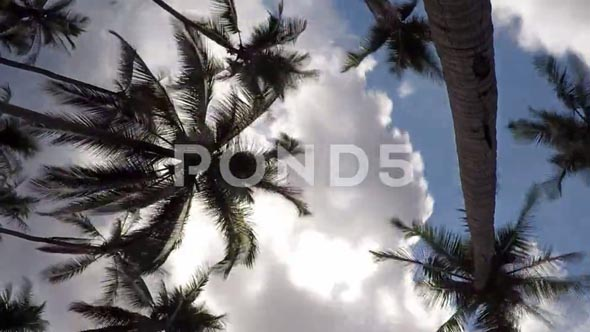 Coconut Palm Trees In Blue Sky With Gloomy Clouds. Timelapse