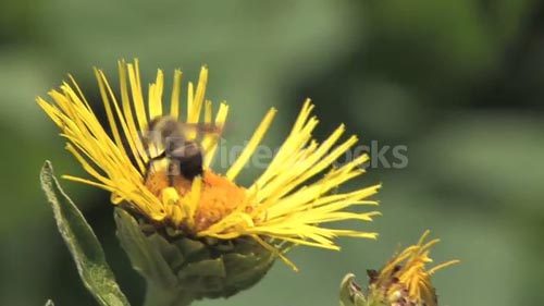 HD Flowers Flower 40