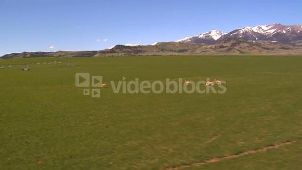 Wildlife Running Across Green Landscape