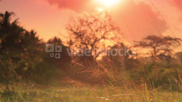 Sunset Over a Field in Kenya 2
