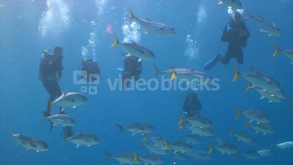 Scuba Divers Watching School of Fish Swim Over Reef