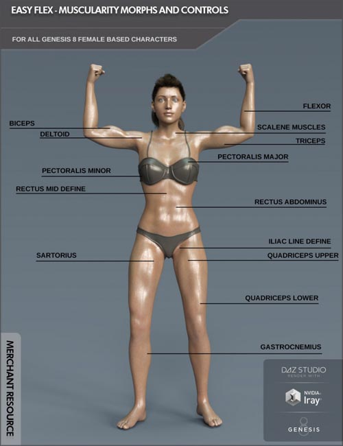 Easy Flex - Muscularity Morphs for Genesis 8 Female and Merchant Resource