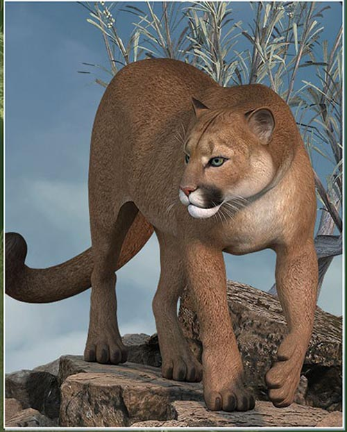 HiveWire Cougar