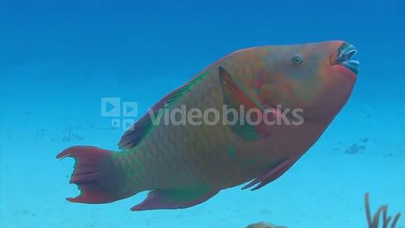 Multicolored Fish Swimming Around