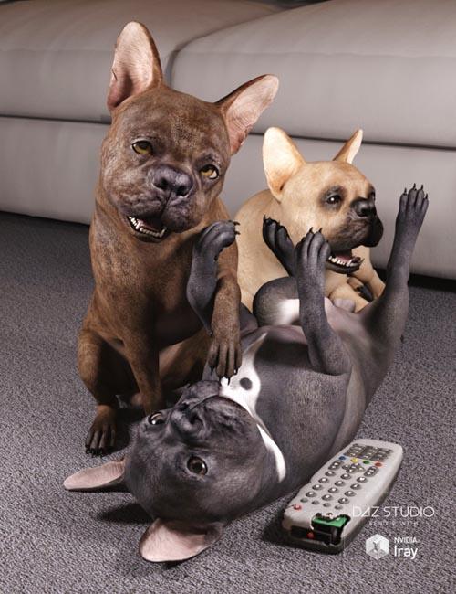 French Bulldog for Daz Dog 8