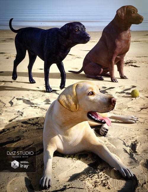 Labrador for Daz Dog 8