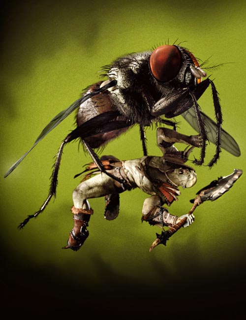 Housefly by AM