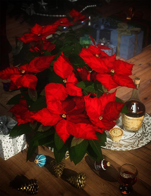 Christmas Poinsettia Plants