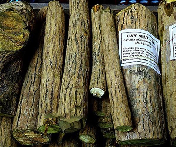 Công dụng chữa bệnh của cây mật gấu