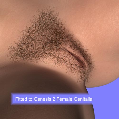 Genital Hair for Genesis 2 Female
