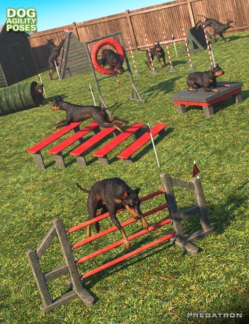 Dog Agility Course Poses