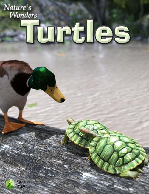 Nature's Wonders Turtles