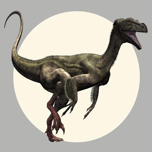 OrnitholestesDR