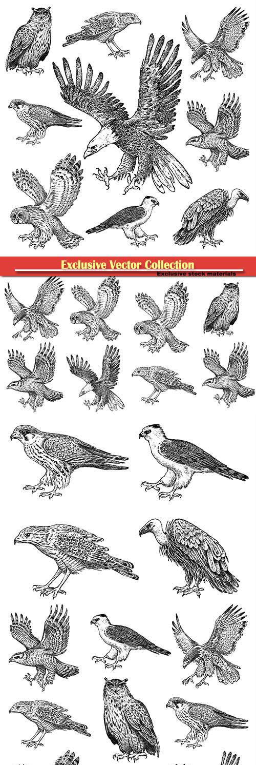Vector drawn birds, owl, eagle, hawk