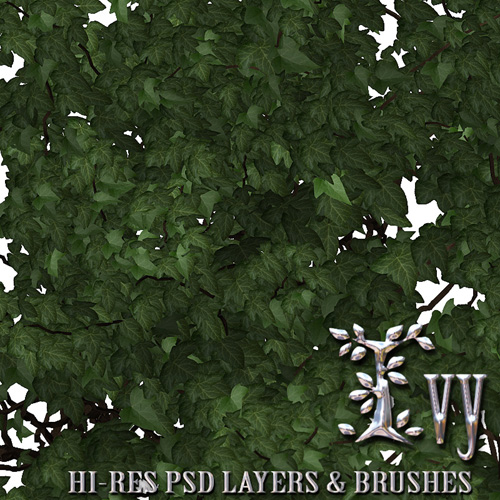 Ivy - PSD Layers & Brushes