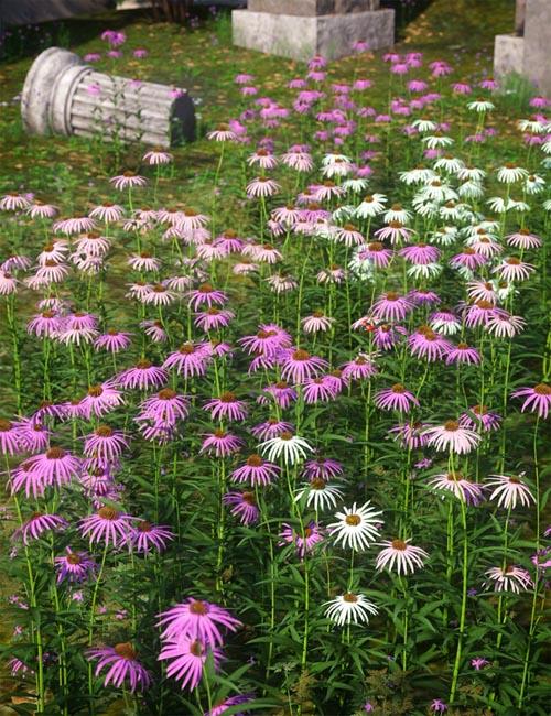 Garden Flowers - Cone Flowers