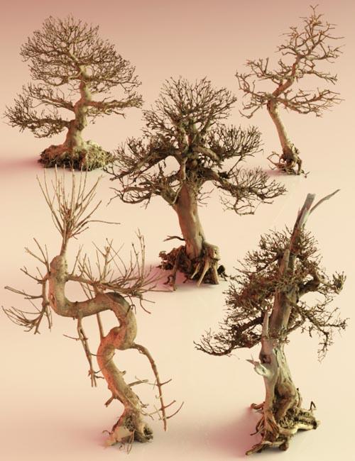 5 Dead Bonsai Trees Volume 2
