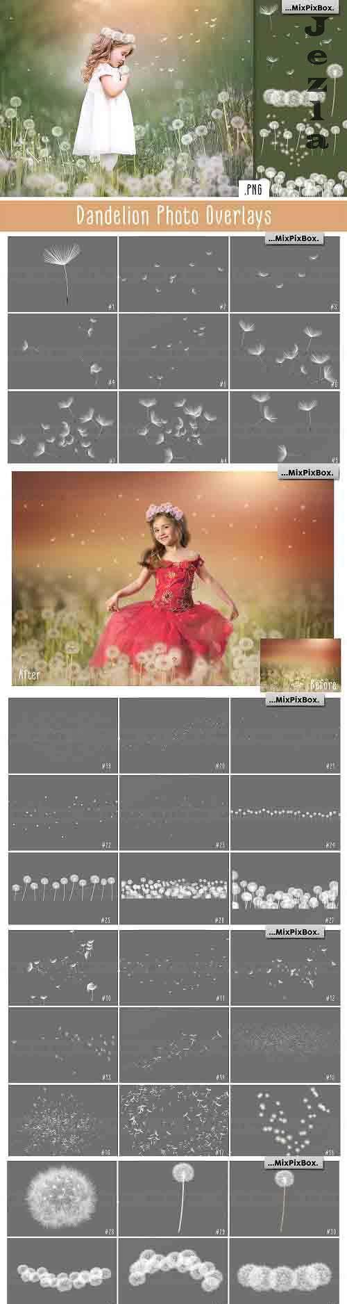 Dandelion Overlays - 5219806