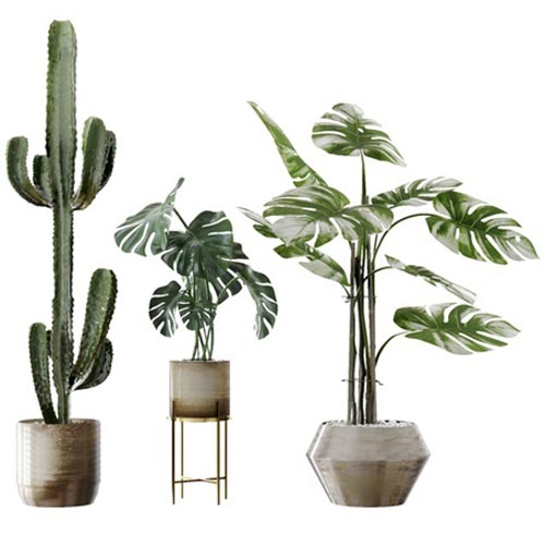 Plants collection 04