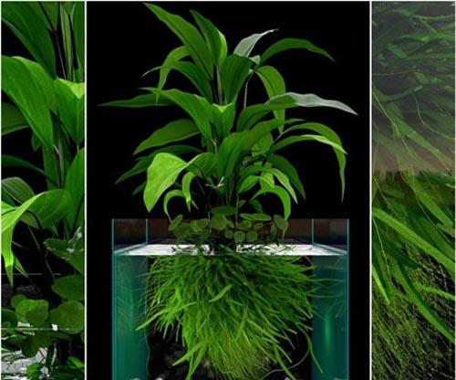 JC Seaweed Aquarium