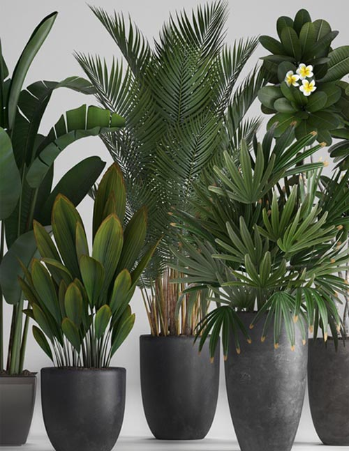 Plant Collection 256