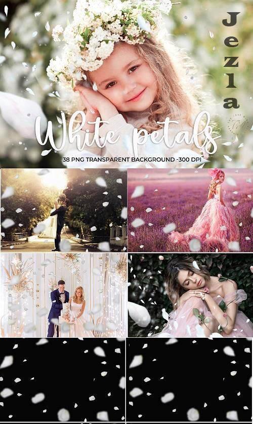 White Petals Overlays - 1547958