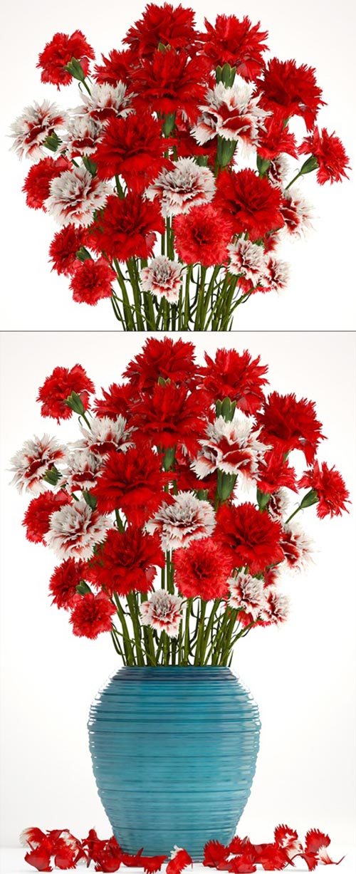 Collection of flowers 13. Carnation