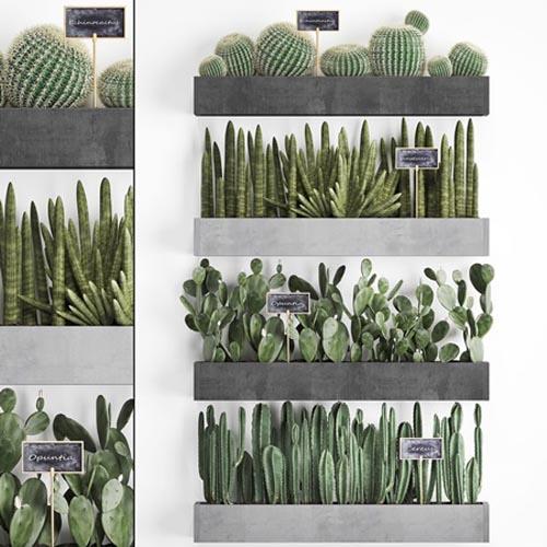 Cactus set wall decor vertical garden 43