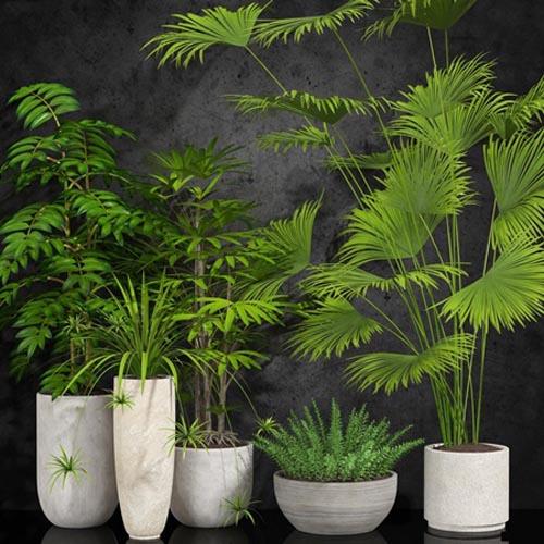 Room plant