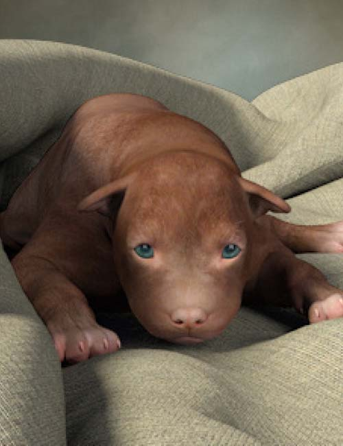 Newborn Puppies for the HiveWire Big Dog