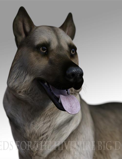 Breeds for the HW Dog - Norwegian Elkhound