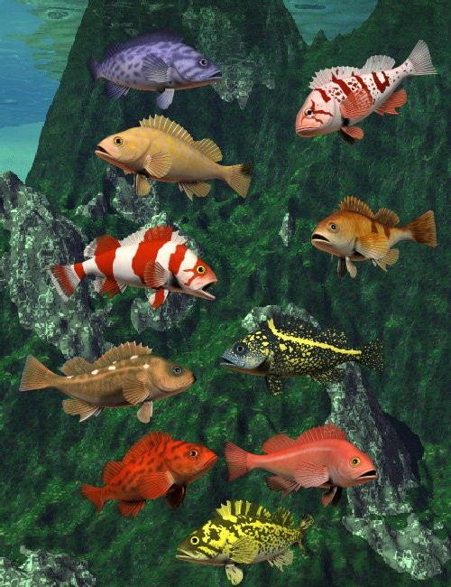 Pacific Rockfish Collection
