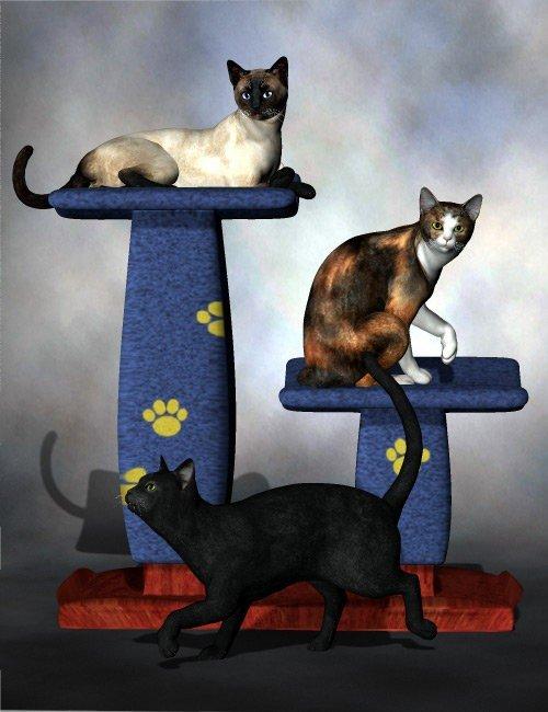 Purrfect Poses for the Millennium Cat