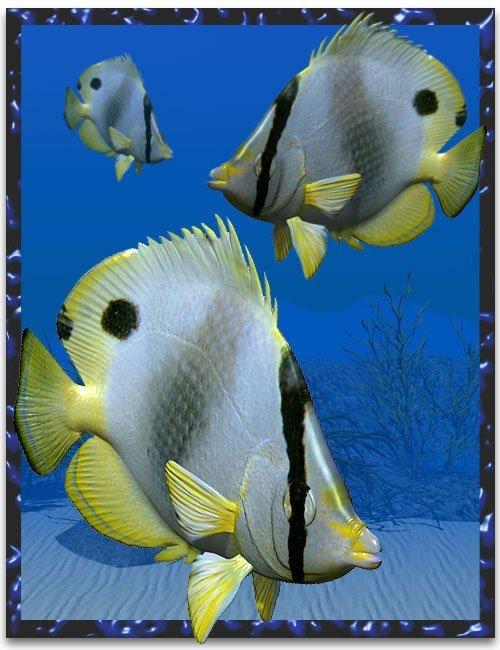 Butterflyfish [ .DUF & Iray UPDATE ]