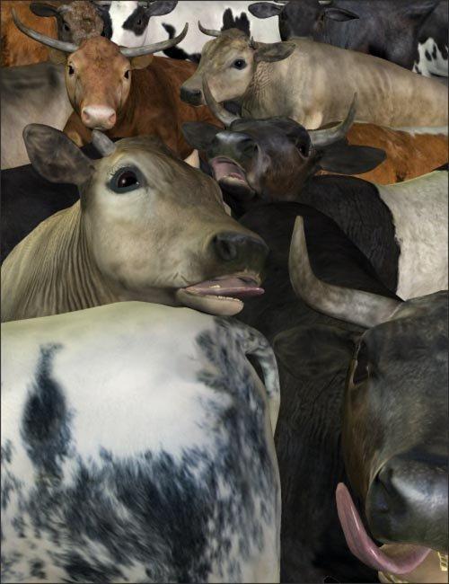 Noggin's Cattle Breeds