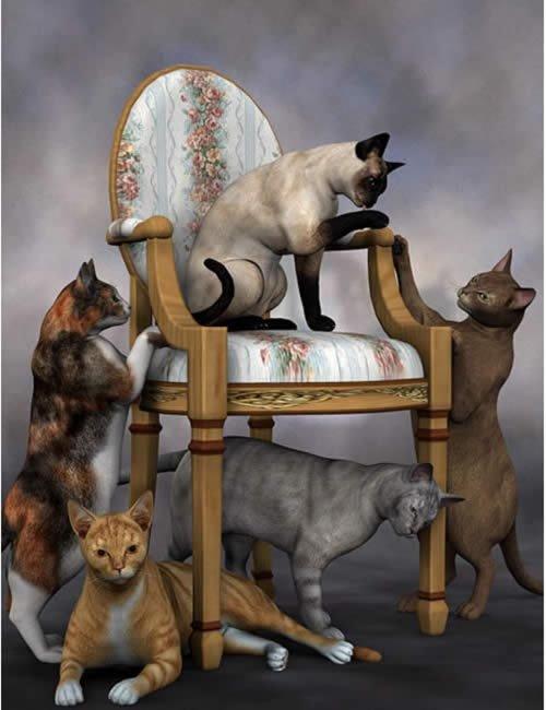 Classic Cats Combo
