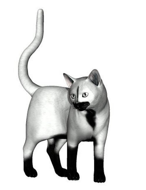 Feline Discovery Poses