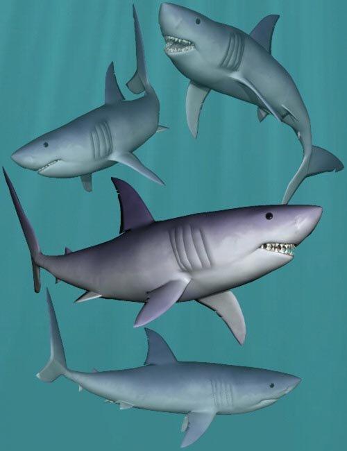 Shark Poses