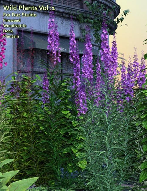 Wild Plants Vol: 1 for Daz Studio