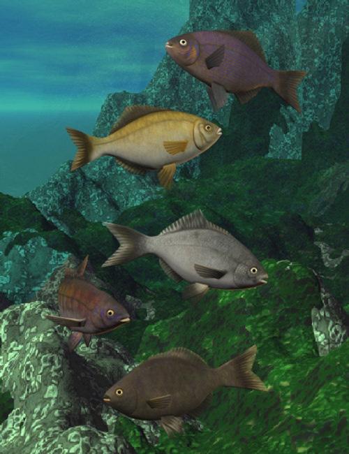 Pacific Seaperch [ .DUF & Iray UPDATE ]